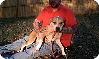 Pit Bull Terrier Dog for adoption in Dover, Tennessee - Myla