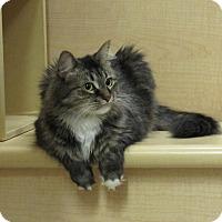 Adopt A Pet :: Virginia - Jackson, NJ