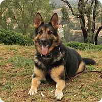 Adopt A Pet :: Hank - Laguna Niguel, CA