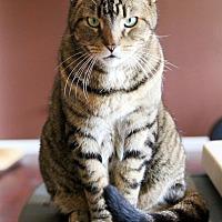 Adopt A Pet :: MichaelCP - Carlisle, PA
