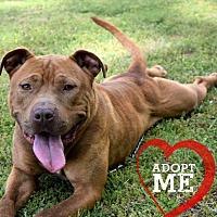 Adopt A Pet :: Levi - Bonaire, GA