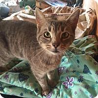 Adopt A Pet :: Astrid - Albany, NY
