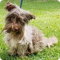 Adopt A Pet :: Roland - Mount Pleasant, SC