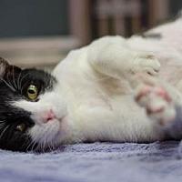 Adopt A Pet :: Bloopy - Philadelphia, PA