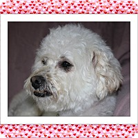 Adopt A Pet :: Adopted!! Bella - IL - Tulsa, OK