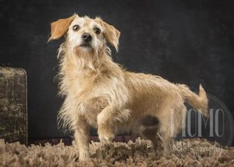 Terrier (Unknown Type, Small) Mix Dog for adoption in Waco, Texas - Freedom
