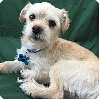 Adopt A Pet :: Echo - San Francisco, CA