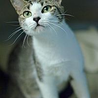 Adopt A Pet :: 10311994 - Brooksville, FL