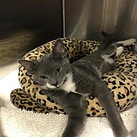 Adopt A Pet :: TEAGAN - Ocala, FL