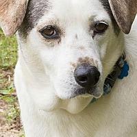 Adopt A Pet :: Gambit - Barrington, RI