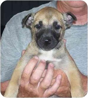 Shepherd (Unknown Type) Mix Puppy for adoption in Metamora, Indiana - Sleepy