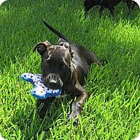 Adopt A Pet :: MONTANA - Loxahatchee, FL