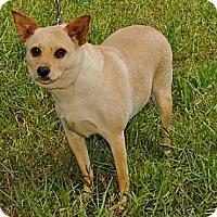 Adopt A Pet :: ZELDA - Bryan, TX