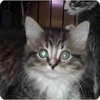 Adopt A Pet :: Loni - Riverside, RI