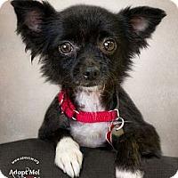 Adopt A Pet :: Giovanni - Phoenix, AZ