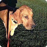 Adopt A Pet :: Garth - Woodlawn, TN