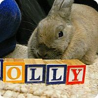 Adopt A Pet :: Lolly - Newport, DE