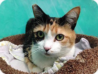 Domestic Shorthair Cat for adoption in Newport Beach, California - Celeste