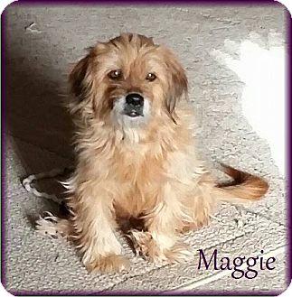 Glen of Imaal Terrier/Norfolk Terrier Mix Dog for adoption in Lincoln, Nebraska - MAGGIE