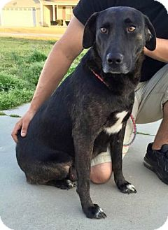 Shepherd (Unknown Type) Mix Dog for adoption in Jacksonville, North Carolina - Molly