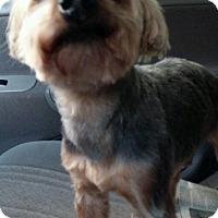 Adopt A Pet :: Amos - Ball Ground, GA