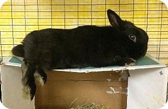 Dwarf Mix for adoption in Woburn, Massachusetts - Oliver