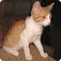 Adopt A Pet :: Mickey - Colmar, PA
