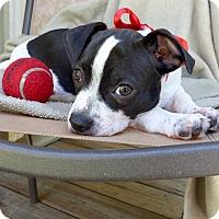 Adopt A Pet :: Tank - Baton Rouge, LA