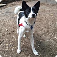 Adopt A Pet :: Marty - La Mirada, CA
