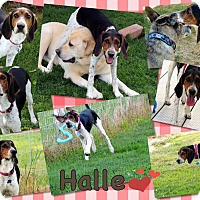 Adopt A Pet :: Halle - Jerome, ID