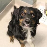 Adopt A Pet :: Surge 5309 - Columbus, GA