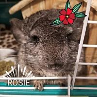Adopt A Pet :: Rosie - Lindenhurst, NY