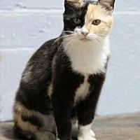 Adopt A Pet :: Professor McGonagall - Stafford, VA
