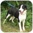 Photo 2 - Border Collie Mix Dog for adoption in St. James, Missouri - Queenie