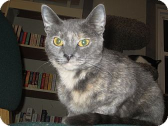 Domestic Shorthair Cat for adoption in Richland, Michigan - Twiggy