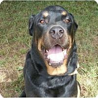 Adopt A Pet :: Boomer - Mission Hills, CA