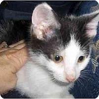 Adopt A Pet :: Libby - Richmond, VA