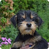 Adopt A Pet :: Ian - South Jersey, NJ