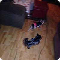 Adopt A Pet :: Jack - Butler, OH