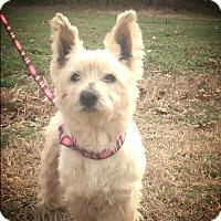 Adopt A Pet :: WestLand