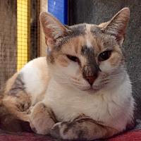Adopt A Pet :: Nadia - Wilmington, DE