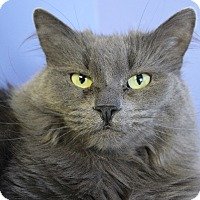 Adopt A Pet :: Gary Shandling - Chicago, IL