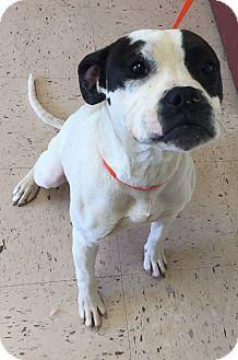 American Bulldog Mix Dog for adoption in McDonough, Georgia - Marny