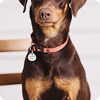 Adopt A Pet :: Kira - Portland, OR