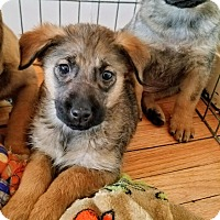 Adopt A Pet :: Zelda(ADOPTED!) - Chicago, IL