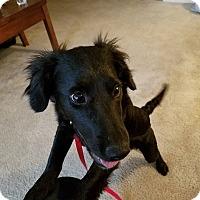 Adopt A Pet :: Akino - Fredericksburg, VA
