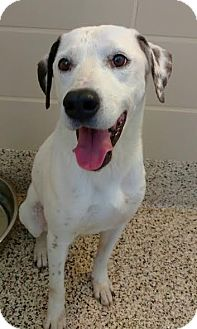 Mixed Breed (Medium) Mix Dog for adoption in Aiken, South Carolina - Rigby