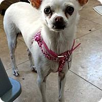 Adopt A Pet :: Heidi - San Diego, CA