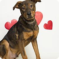 Adopt A Pet :: King - Baton Rouge, LA