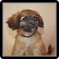 Adopt A Pet :: Ruben - San Diego, CA